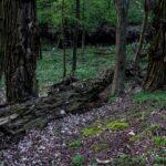 Bujny dziki las na terenie podmokłym