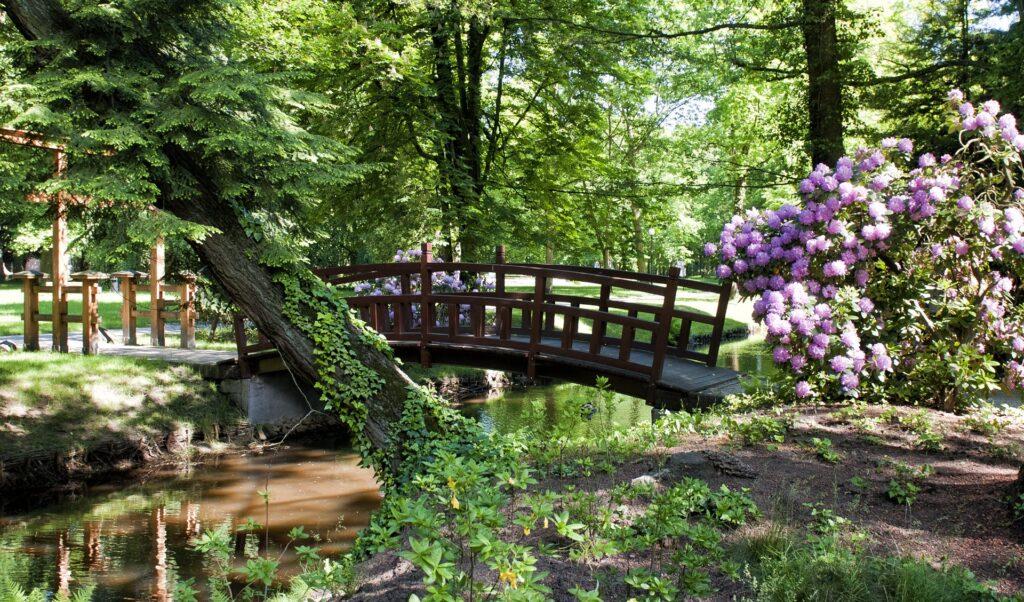 Park, na pierwszym planie fioletowe rododendrony i drewniany mostek