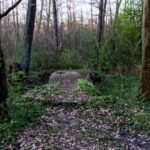 Stary mostek w lesie