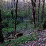 Bujny dziki las, w głebi drewniany mostek