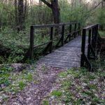 Drewniany mostek nad strumieniem przepływającym przez bujny las