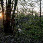 Zielony las. Przez drzewa przebija się słońce