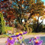 Ogród w jesiennych kolorach. Na pierwszym planie fioletowe kwiaty. Z tyłu drewniane ławki