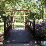 Drewnainy mostek w parku. Po prawej stronie krzew fioletowych rododendrownów